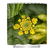 Atlanta Botanical Garden Flowers V9 Shower Curtain