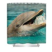Atlantic Bottlenose Dolphin Shower Curtain