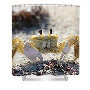 Atlantic Ghost Crab 2760 Shower Curtain