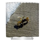 Atlantic Ghost Crab Shower Curtain