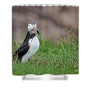 Atlantic Puffin With Sandeels Shower Curtain