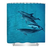Atlantic Spotted Dolphin Adults Shower Curtain