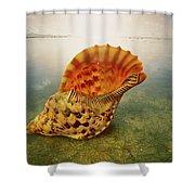 Atlantic Trumpet Triton Shell Shower Curtain
