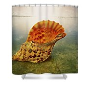Atlantic Trumpet Triton Shell Shower Curtain
