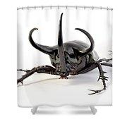 Atlas Beetle Shower Curtain