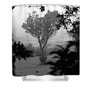 Attached  Shower Curtain