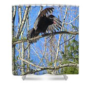Attack Of The Turkey Vulture Shower Curtain