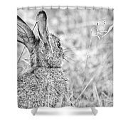 Attentive Hare Shower Curtain