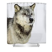 Attentive Shower Curtain