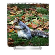 Attentive Squirrel Shower Curtain