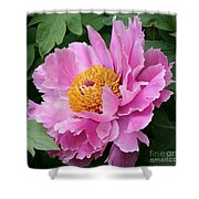 Attractive Pink Peony Shower Curtain
