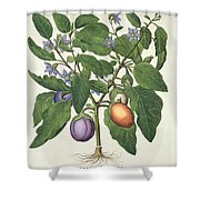 Aubergine Melanzana Fructu Pallido Shower Curtain