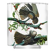 Audubon Chuck-will's Widow Shower Curtain