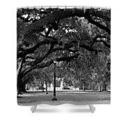 Audubon Park Oaks Shower Curtain