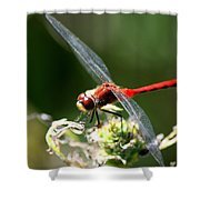August Dragonfly  Shower Curtain