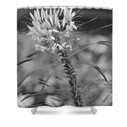August Garden Shower Curtain