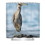 Aukuu Shower Curtain
