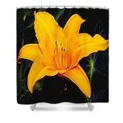Aurelian Lily Shower Curtain