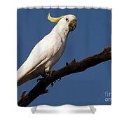 Australian Bird Shower Curtain