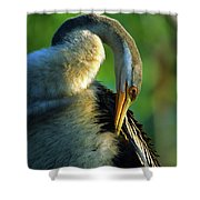 Australian Darter Preening Shower Curtain