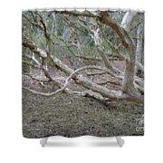 Australian Native Tree 4 Shower Curtain