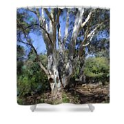 Australian Native Tree 5 Shower Curtain