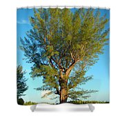 Australian Pine At Sundown Shower Curtain