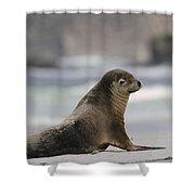Australian Sea Lion On Beach Kangaroo Shower Curtain