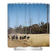 Australian Sheep Shower Curtain