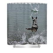 Australian Shepherd Fun At The Lake Chasing The Ball Shower Curtain