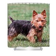 Australian Terrier Dog Shower Curtain