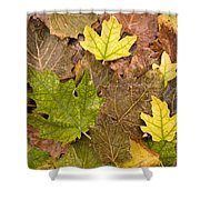 Autumm Is Coming 2 Shower Curtain