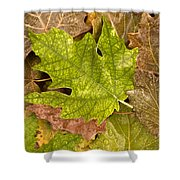 autumm is coming 3 - A carpet of autumn color leaves Shower Curtain