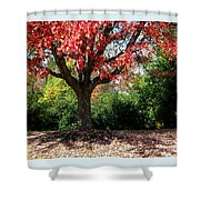 Autumn Ablaze Shower Curtain