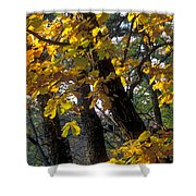 Autumn Shower Curtain by Anonymous