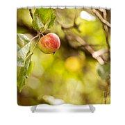 Autumn Apple Shower Curtain