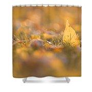 Autumn Ash Leaves Shower Curtain