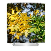 Autumn Ash Tree Leaves Under The Sun Shower Curtain