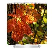 Autumn Begins 2 Shower Curtain