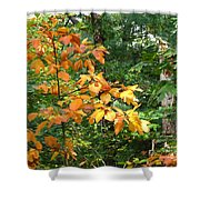 Autumn Begins At Breakheart Reservation Shower Curtain