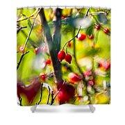 Autumn Berries  Shower Curtain