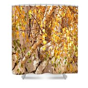 Autumn Birch Leaves Shower Curtain