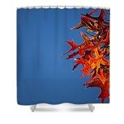 Autumn Blue Shower Curtain
