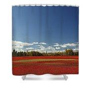 Autumn Blueberry Field Maine Shower Curtain