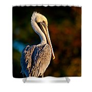 Autumn Brown Pelican Shower Curtain
