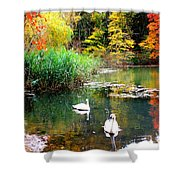 Autumn By The Swan Lake Shower Curtain