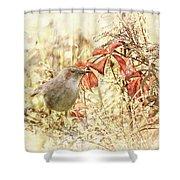 Autumn Catbird Shower Curtain