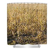 Autumn Cattle Silage Corn In Maine Shower Curtain by Keith Webber Jr