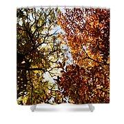 Autumn Chestnut Canopy   Shower Curtain