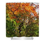 Autumn Color At Old Woman Creek 2 Shower Curtain